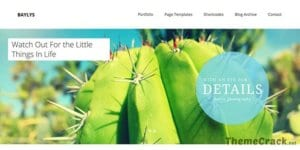 Elmastudio Baylys WordPress Theme